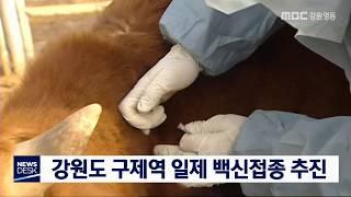 강원도 구제역 일제 백신접종 추진