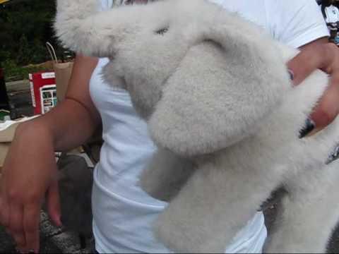 albino dumbo