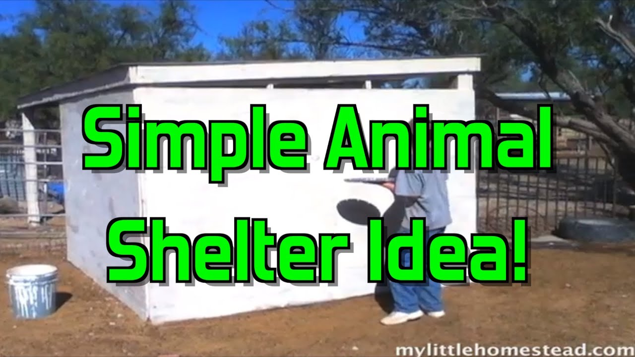 Simple Animal Shelter Idea YouTube