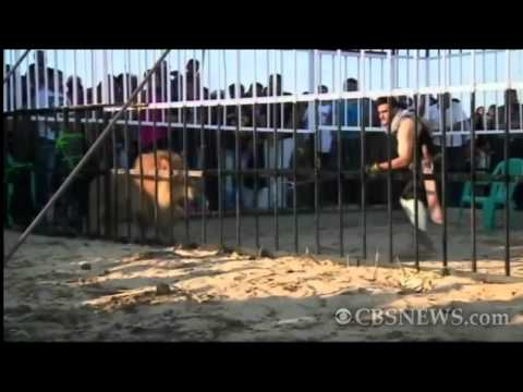 Man fights lion to boost Egypt tourism