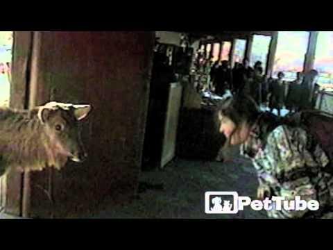お行儀良くお辞儀をする鹿