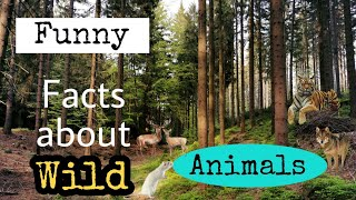 6. Do You Know ~ The funny facts about animals