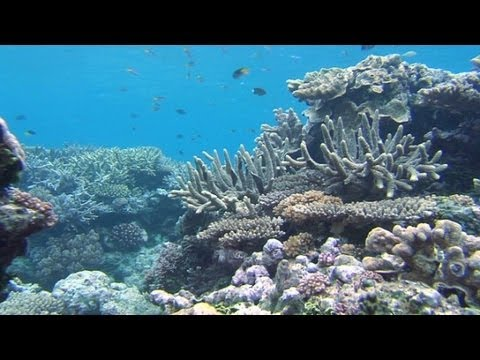 Learning the Great Barrier Reef