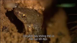 thế giới quanh ta -  cộng sinh ếch và nhện đốm trong