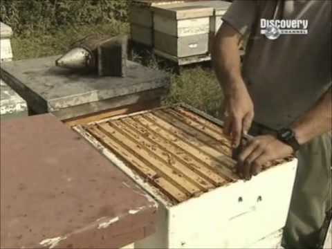 How It's Made   Honey