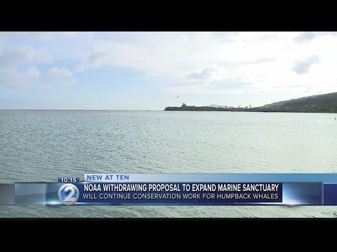 NOAA abandons plan to expand Humpback Whale National Marine Sanctuary