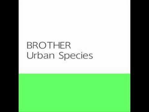 Brother :: Urban Species