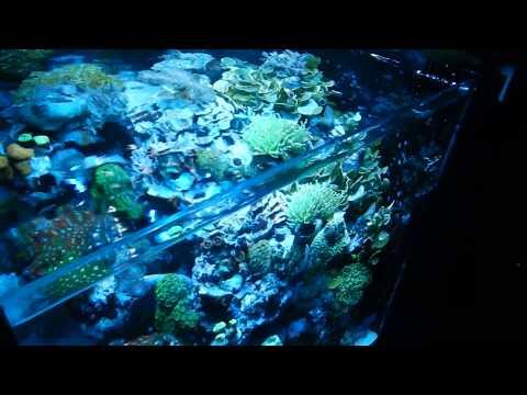 Aqua medic blenny advanced riffaquarium 80l nanoriff reef tank
