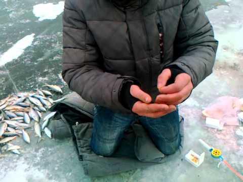 рыбалка в чернигове на карпа