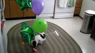 DOG vs. BALLOONS IV: AIRBORNE ASSAULT