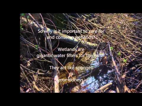 Our Wetland - The Franciscan School, Raleigh, NC - 04/15/2014