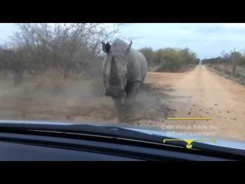 Rhino charge - South Africa