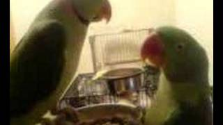 my loving birds 7