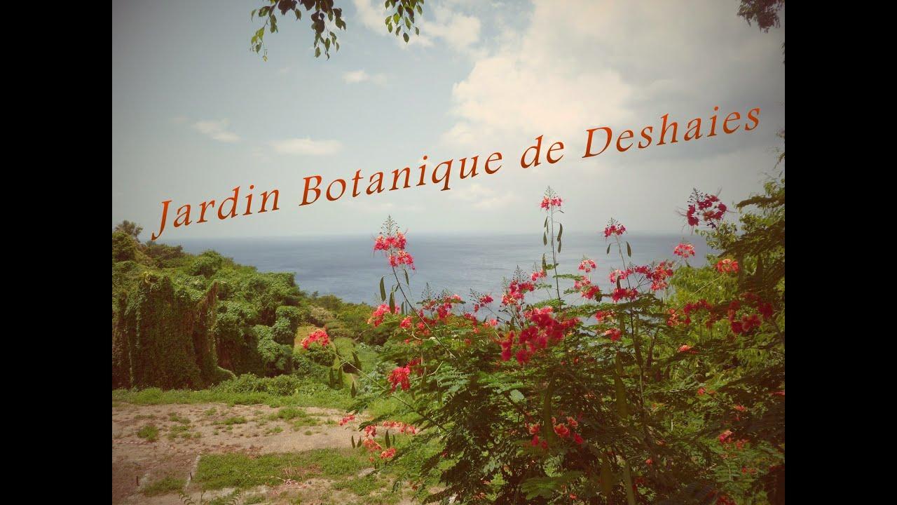 Jardin botanique de deshaies guadeloupe 2014 youtube for Jardin botanique guadeloupe