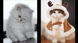 Funny Animals Doing Funny Things.Best Funny Compilation