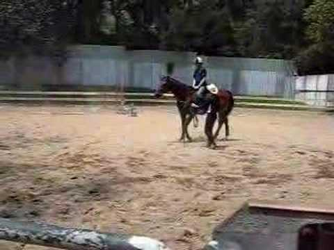 Horse Riding Training