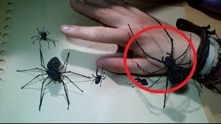 Spider for Terrific PRANK - 3d scribbler