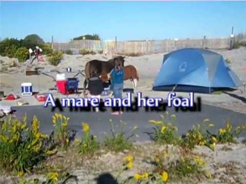 Assateague nudist camping pics 474