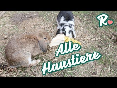 Unsere Tiere im Garten -  Vlog#845 Rosislife