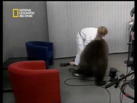 مشهد مؤثر دب متوحش يهاجم امراة Impressive scenery Bear.mpg