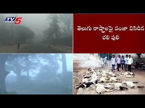 తెలుగు రాష్ట్రాళ్లో చలి పంజా | Weather Disaster in The Telugu States as of Cyclone Effect | TV5 News
