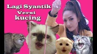 Lagi Syantik Versi Kucing (Siti Badriah)