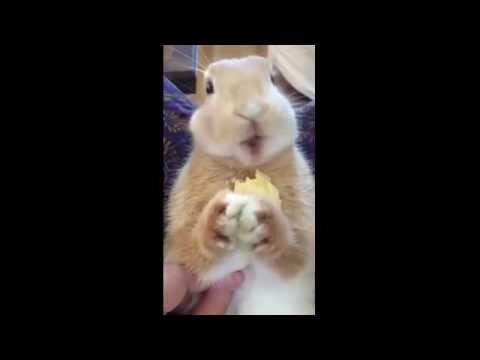 大好物のバナナを食べるウサギを正面からドアップでみるとつぶらな瞳がたまらない!