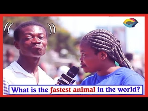 What is the Fastest Animal in the World?  Street Quiz  Funny Videos  Funny African Videos