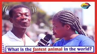 What is the Fastest Animal in the World? | Street Quiz | Funny Videos | Funny African Videos