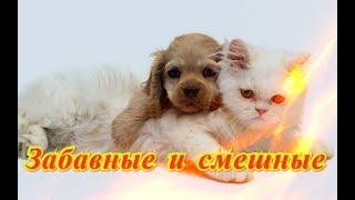 Приколы с животными Смешное видео кошки собаки Позитив Создай себе хорошее настроение