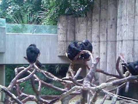 Die Toten Hosen - Sonntag im Zoo