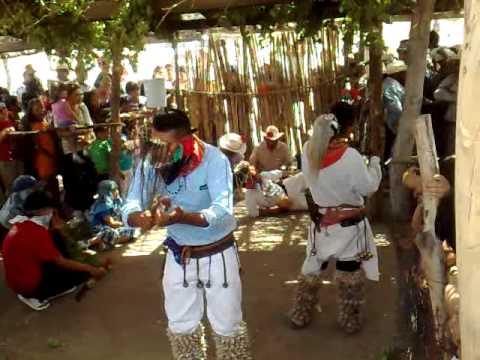 Tapizuelas alamos sonora semana santa 2011 danza de pascola venado