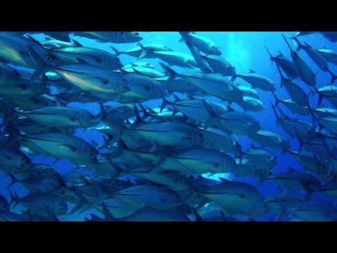 Scuba Diving Balicasag & Bohol, September 2013 : Full HD 1080P (Revised)