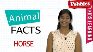Interesting Animal Facts : Horse | Horse Essay Bengali | Horse Song | Horse Story | Learn Animals
