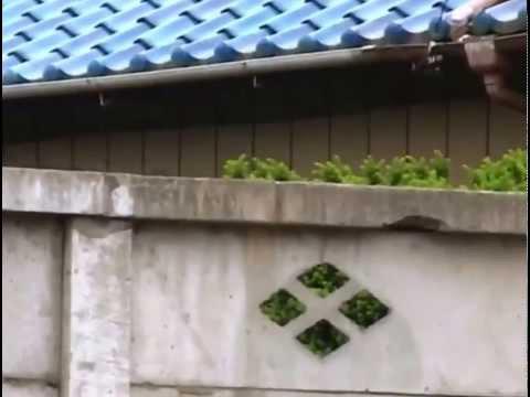 Chú Khỉ Thông Minh Phiêu Lưu Ký 21