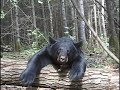 Bear Hunting - World Class Hunting and Fishing DVD Preview