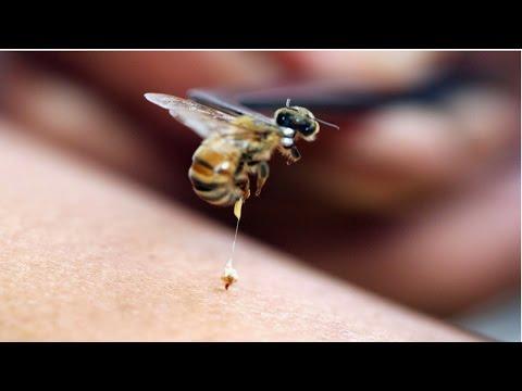 Curso Apiterapia - Tratamento com Produtos das Abelhas