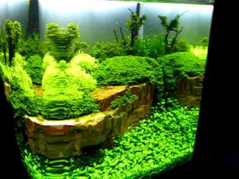 Zapraszam do obejrzenia relacji na gor�co z wystawy The Art of the Planted Aquarium 2011 w Hanoverze. Go�cili�my tam z wizyt� podziwiaj�c konkursowe prace uc...