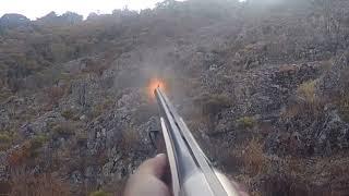 chasse au sanglier en Corse tir de deux sangliers, magnifique battue