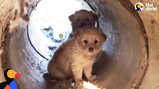 Scared Puppies Rescued from a Pipe | The Dodo