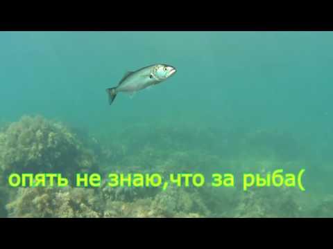 подводная рыбалка в смоленске