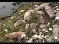 THOUSANDS OF DEAD PIGS FOUND IN CHINESE RIVER MARCH 11, 2013