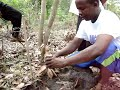 Tanzania Tree Planting Demonstration