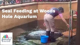Seal Feeding at Woods Hole Aquarium