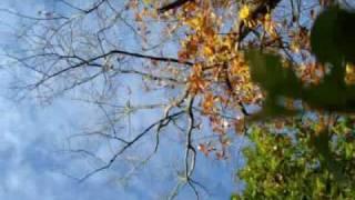 Watch Uncle Earl Pale Moon video
