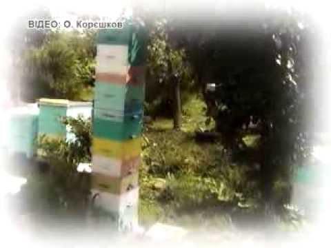 Пчеловод MegaStaratel в TV-программе «Новая жизнь - это Я!»