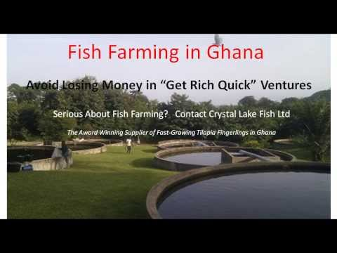 Fish Farming Investment In Ghana   5 Ways To Lose Money   Tilapia Fish Farm Guide   West Africa