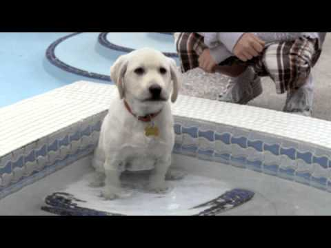 Marley & Me The Puppy Years - Trailer video