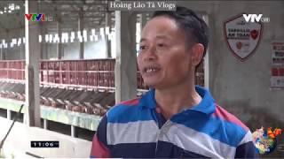Bản Tin VTV1 - Cargill Đồng Hành Để Ngăn Chặn Bệnh Dịch Tả Heo Châu Phi(ASF)