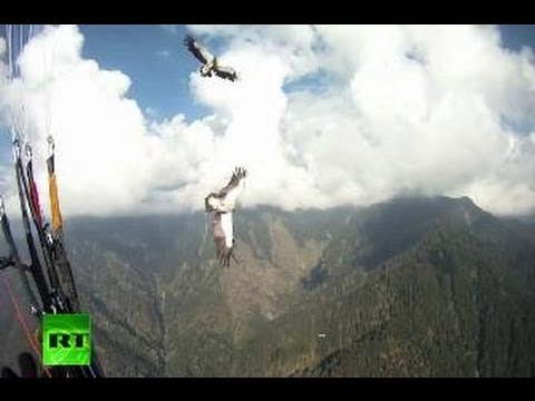Amazing video: Vulture rams paraglider mid-air, both survive